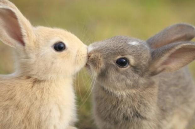 kissing-rabbits